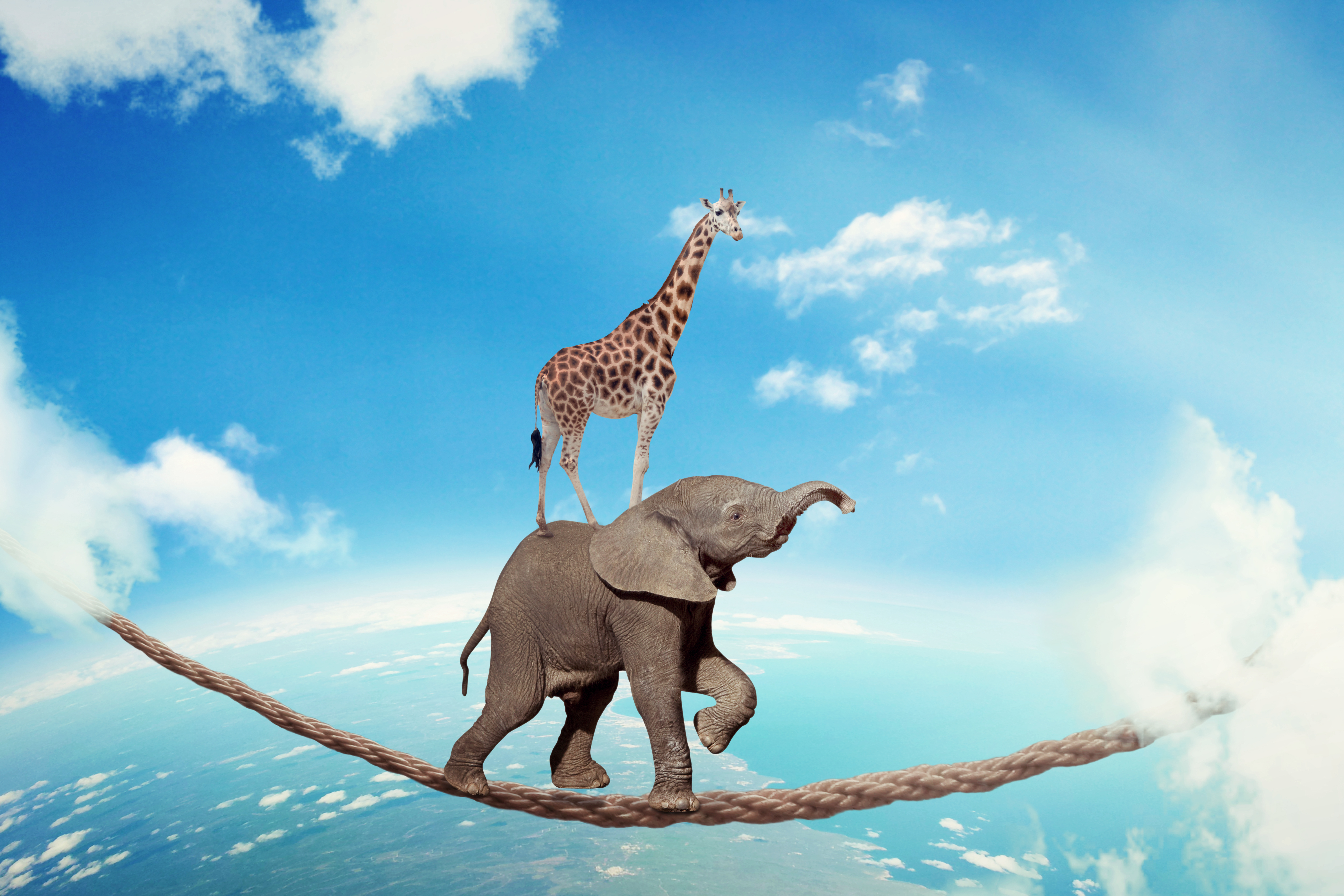 Managing risk business challenges uncertainty concept. Elephant with g